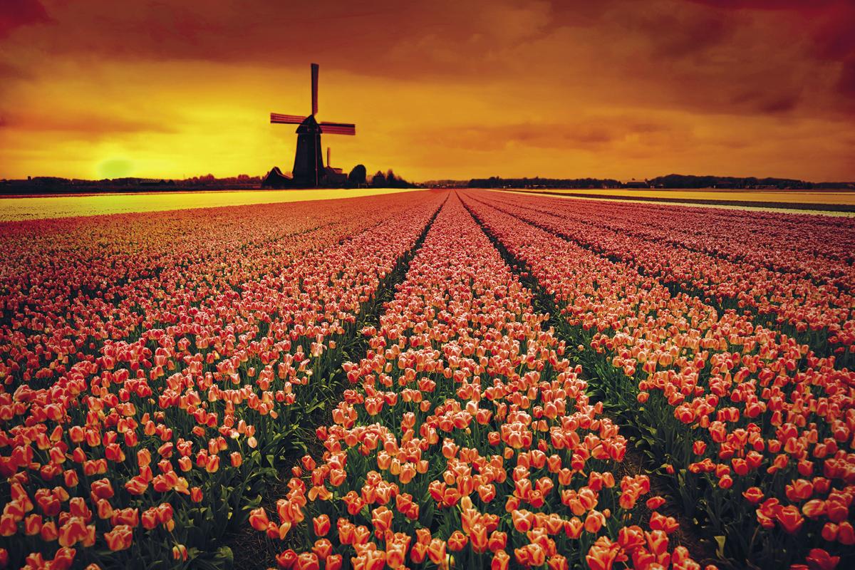 Windmills, Tulips & Belgian Delights